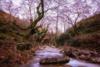 Μυρτιά Αιτωλοακαρνανίας - Εκεί που η ομορφιά απλά χάνει τα λόγια της (pics)