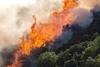 Ηλεία: Στις φλόγες 30 στρέμματα στην Χαριά (pics)