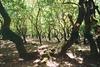 Πάτρα: Παρέμβαση της κίνησης 'Κοινοτικόν' για το Πλατανόδασος