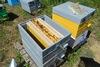 Βόνιτσα: Aφαίρεσαν τριάντα πέντε κυψέλες μελισσών