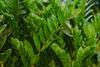 Με ένα φίλτρο του καφέ μπορείτε να βοηθήσετε τα φυτά σας