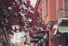 Οι λουλουδάτες πινελιές στον πεζόδρομο της Ηφαίστου (φωτο)