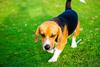 Πάτρα: Έκλεψαν σκύλο από οικία