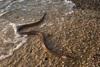 Αν βλέπατε αυτό το πλάσμα σε θάλασσα της Πάτρας τι θα κάνατε;