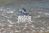 Πύργος: Κινητοποίηση για την σωτηρία δελφινιού (pics+video)