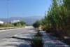 Πάτρα: Γεμάτα χορτάρια - κλαδιά τα πεζοδρόμια της οδού Βενιζέλου (pics)