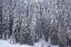 Γερμανία: Αυξήθηκε το επίπεδο συναγερμού για χιονοστιβάδες