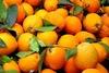 Κατασχέθηκαν 1,6 τόνοι πορτοκαλιών και ακτινιδίων στον Πειραιά