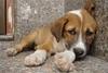 Αιγιαλεία: Πυροβόλησε σκύλο και τον εγκατέλειψε