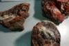 Λέσβος: Toυρίστες έκρυψαν απολιθώματα στις αποσκευές τους (φωτο)
