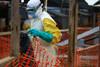 Κονγκό - Πέθανε ο πρώτος άνθρωπος που μολύνθηκε από τον ιό Έμπολα