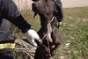 Αχαΐα: Σκύλος εντοπίστηκε δεμένος σε δέντρο