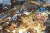 Εικόνες ντροπής στο νεκροταφείο Σχιστού (φωτο)