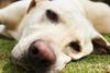 Ηλεία: Δηλητηρίασε σκύλο μέσα σε αγρόκτημα