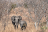 OHE: Η ξηρασία απειλεί 45 εκατομμύρια ανθρώπους στη νότια Αφρική