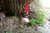 Πάτρα: Nεκρά πρόβατα σε αποσύνθεση στην περιοχή του Ρωμανού (φωτο)