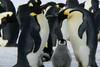 Πιγκουίνοι σε ανθρώπινο μέγεθος «κυβερνούσαν» τη Γη μετά τους δεινόσαυρους