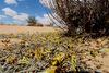 Καταστροφικά σμήνη ακρίδων στην Αφρική