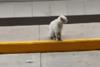 Αδέσποτη γάτα οδηγεί γυναίκα να της αγοράσει την αγαπημένη της τροφή (video)