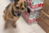 Ουχάν: Σκύλος περιμένει επί τρεις μήνες σε νοσοκομείο το αφεντικό του