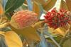 Ερευνητές στο Ισραήλ δηλώνουν ότι παρήγαγαν ηλεκτρισμό από φυτά