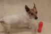 Πάτρα: Bρέθηκε αρσενικό σκυλάκι στον Καστελόκαμπο (φωτο)