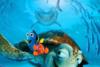 Προβολή Ταινίας 'Ψάχνοντας το Νέμο' στο Υπαίθριο Θέατρο Γεώργιος Παππάς
