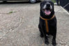 Εγκατέλειψαν σκύλο με σημείωμα που έγραφε «με άφησαν γιατί δεν έχω μάθει να είμαι καλός»