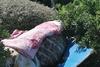 Καλοκαιράκι και το... ελεύθερο κάμπινγκ στον μόλο της Πάτρας ξεκίνησε (φωτό)