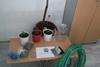Δυτ. Ελλάδα:Κατασχέθηκαν 34 δενδρύλλια κάνναβης και πάνω από 100 γραμμάρια της ναρκωτικής ουσίας