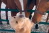 Τα πιο απίθανα ζώα και κατοικίδια του 2020 μέχρι τώρα (video)