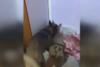 Αστυνομικός σκύλος «ξετρύπωσε» ποσότητες κάνναβης στην Πιερία