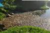 Ροδόπη: Χιλιάδες νεκρά ψάρια στη λίμνη Ισμαρίδα και στον ποταμό Κομψάτο (video)