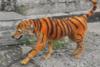 Έβαψαν σκύλο πορτοκαλί με μαύρες ρίγες για να μοιάζει με τίγρη