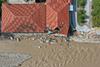 Κακοκαιρία «Ιανός»: Εικόνες Αποκάλυψης στη Θεσσαλία - Αγωνία για την 43χρονη αγνοούμενη