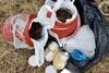 'Τσάκωσαν' διακινητή ναρκωτικών σε περιοχή του Πύργου (φωτο)