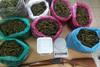 Ηλεία: Αστυνομικοί κατάσχεσαν πάνω από 23 κιλά κάνναβης - Εκρίζωσαν 127 δενδρύλλια (φωτο)