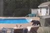 Άνδρας κοιμόταν σε ξαπλώστρα όταν ξαφνικά ένιωσε ένα σκούντημα από αρκούδα (video)