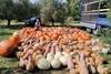 Αύξηση στη ζήτηση διακοσμητικής κολοκύθας στην Ελλάδα λόγω… Halloween!