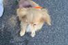 Πάτρα: Βρέθηκε το εικονιζόμενο σκυλάκι - Το αναγνωρίζετε;