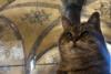 Πέθανε η Γκλι, η διάσημη «γάτα της Αγίας Σοφίας»
