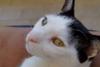 Χάθηκε μια γατούλα στο Νότιο Πάρκο της Πάτρας (pics)