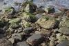 Πάτρα: Τα λύματα έκαναν πράσινα τα βράχια μπροστά από το Νότιο Πάρκο