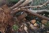 Πεντέλη: Απομακρύνθηκαν 30.000 κυβικά πεσμένων δέντρων μετά τη «Μήδεια»