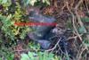 Ναυπακτία: Προσπάθησε να βάλει φωτιά με ένα μπιτόνι πετρέλαιο δίπλα σε σπίτια (video)
