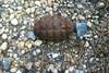 Αχαΐα: Βρέθηκε χειροβομβίδα στην περιοχή της Ροδινής
