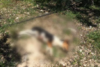 Kτηνωδία στην Κρήτη: Πυροβόλησε και σκότωσε σκυλάκι