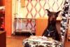 Έξυπνος σκύλος αποτυγχάνει… επιτυχώς σε τεστ αυτοσυγκράτησης (video)