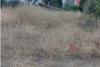 Πάτρα: Eν μέσω πύρινης κόλασης οικόπεδο στα Δεμένικα παραμένει ακαθάριστο (φωτο)