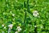 Τρία δραστικά βότανα που μας φτιάχνουν το κέφι